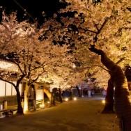 新庄村 桜